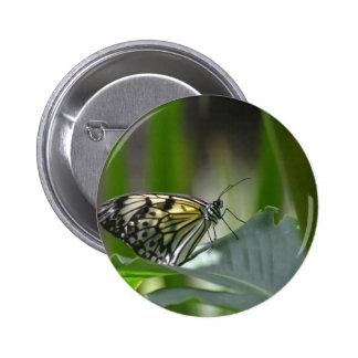 Perfección de la mariposa pin