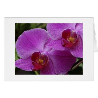 Perfección de la orquídea tarjeta de felicitación