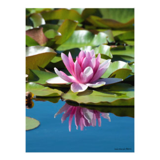 Perfección del lirio de agua - reflexión #1 fotografía