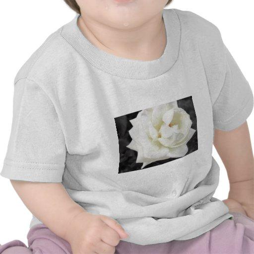 Perfección del rosa blanco 4 camiseta