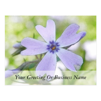 Perfect Blue Creeping Phlox Flower Postcard