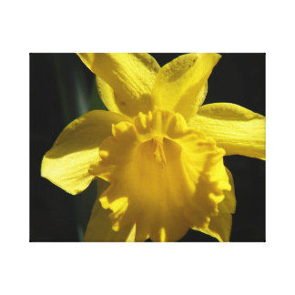 Perfect Daffodil Canvas Print
