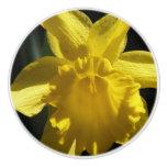 Perfect Daffodil Ceramic Knob