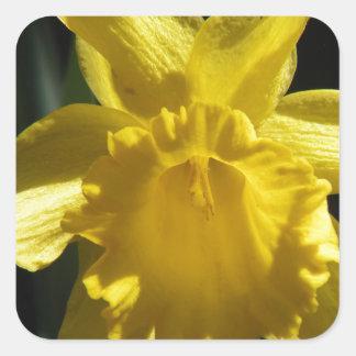 Perfect Daffodil Square Sticker