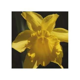 Perfect Daffodil Wood Wall Decor