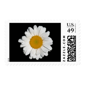 'Perfect Daisy' Postage Stamps