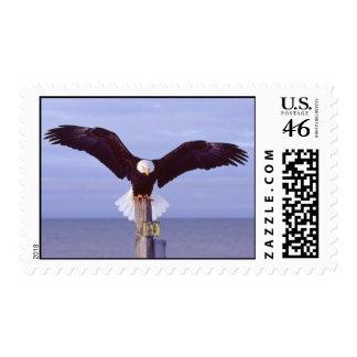 Perfect Landing Postage Stamp