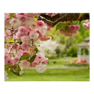 Perfect landscaping with blooming cherry tree in print
