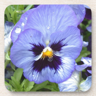 Perfect Pansy Beverage Coaster