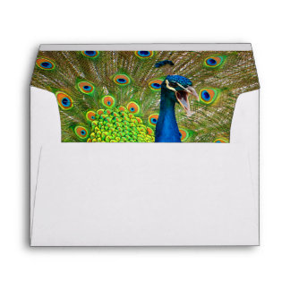 Perfect Peacock Plumage Envelope