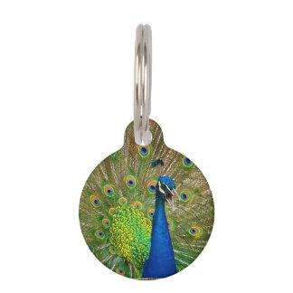 Perfect Peacock Plumage Pet Name Tags