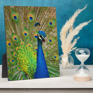 Perfect Peacock Plumage Plaque