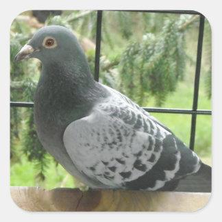 Perfect Pigeon Square Sticker