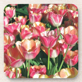 Perfect Pink and Peach Tulips Beverage Coaster