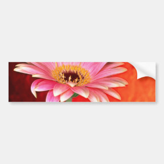 Perfect pink and yellow gerbera daisy blossom  flo bumper stickers