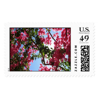 Perfect Pink Bougainvillea In Blossom Postage Stamps
