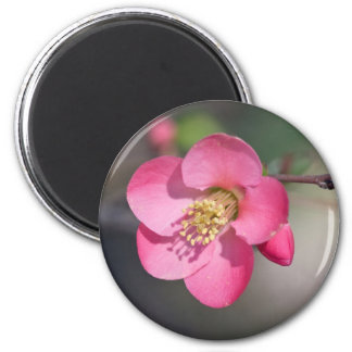 Perfect Pink Flowering Quince 2 Inch Round Magnet