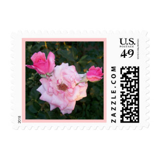 Perfect Pink Rose and Two Rosebuds Postage Stamp