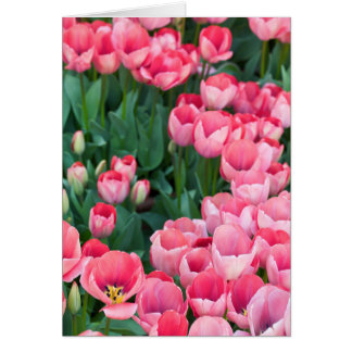 """""""Perfect Pink Tulips"""" Card"""