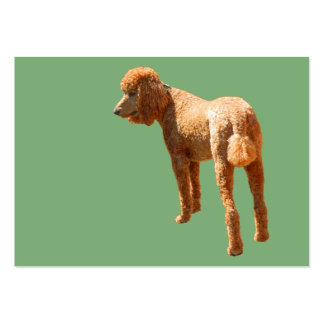 PERFECT POODLE LARGE BUSINESS CARDS (Pack OF 100)