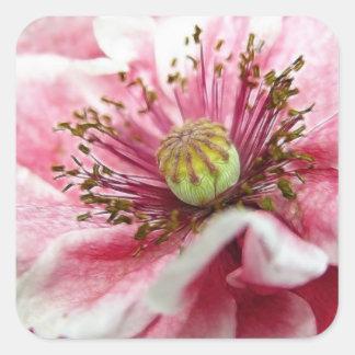 Perfect Poppy Close Up Square Sticker