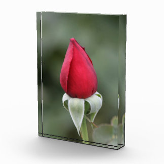 Perfect Red Rose Bud Acrylic Award