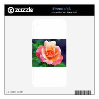 Perfect Rose in Bloom Decals For The iPhone 4