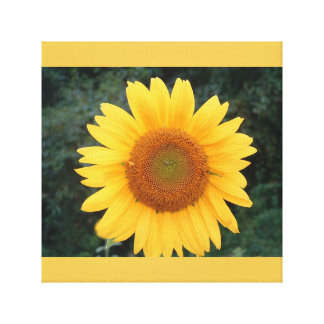 Perfect sunflower..... canvas print