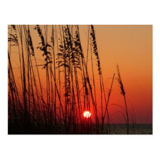 Perfect  Sunset Postcard
