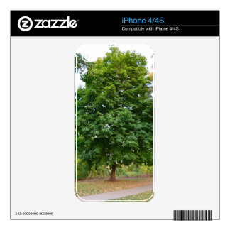 Perfect Tree Skins For iPhone 4