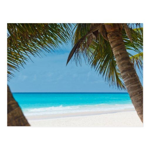 Perfect Tropical Paradise Beach Postcard