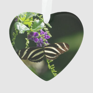 Perfect Zebra Butterfly