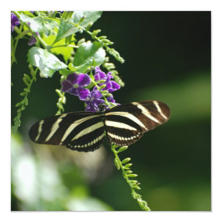 Perfect Zebra Butterfly Announcements
