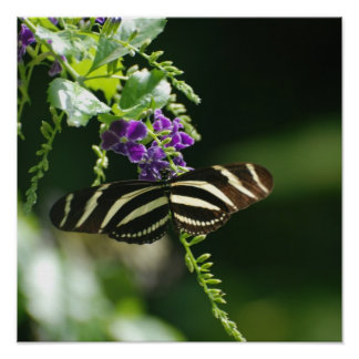 Perfect Zebra Butterfly Posters