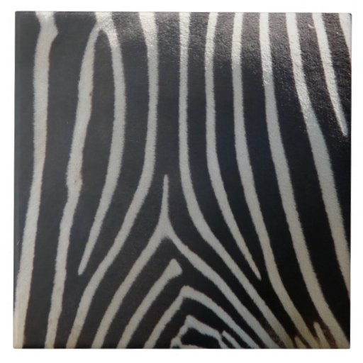 Perfectamente estampado de zebra azulejo cuadrado grande