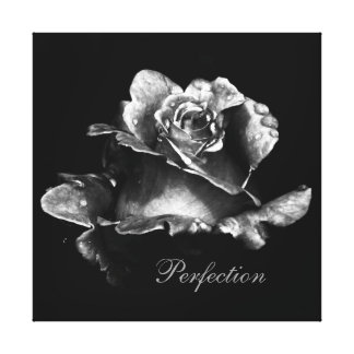 Perfection- Black and White Rose Canvas Print