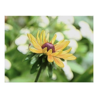 Perfection - Black Eyed Susan Posters
