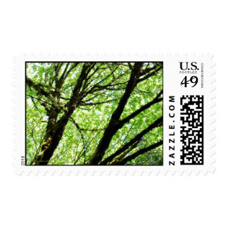 Perfectly Filtered Sunlight Postage
