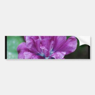 Perfectly Purple Parrot Tulip Bumper Sticker