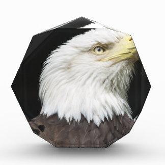 Perfil americano de Eagle calvo