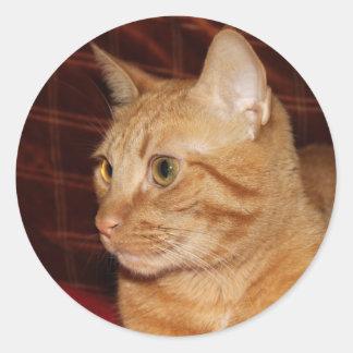 Perfil anaranjado de la cara del gato de Tabby Pegatina Redonda