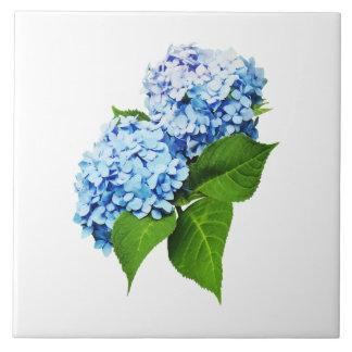 Perfil azul del Hydrangea Teja Ceramica