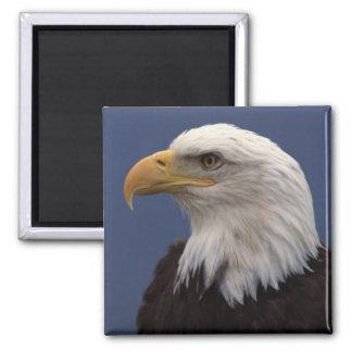 Perfil de Eagle calvo Iman Para Frigorífico