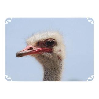 """Perfil de la avestruz invitación 5"""" x 7"""""""