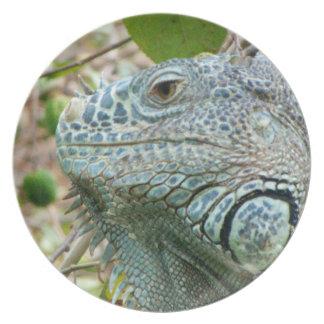 Perfil de la iguana plato de comida