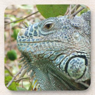 Perfil de la iguana posavasos