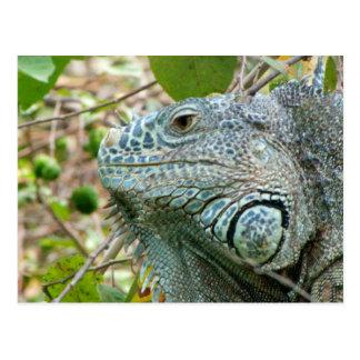Perfil de la iguana postales