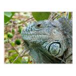 Perfil de la iguana tarjetas postales