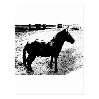 Perfil de la mula en blanco y negro postal
