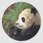Perfil de la panda pegatinas redondas